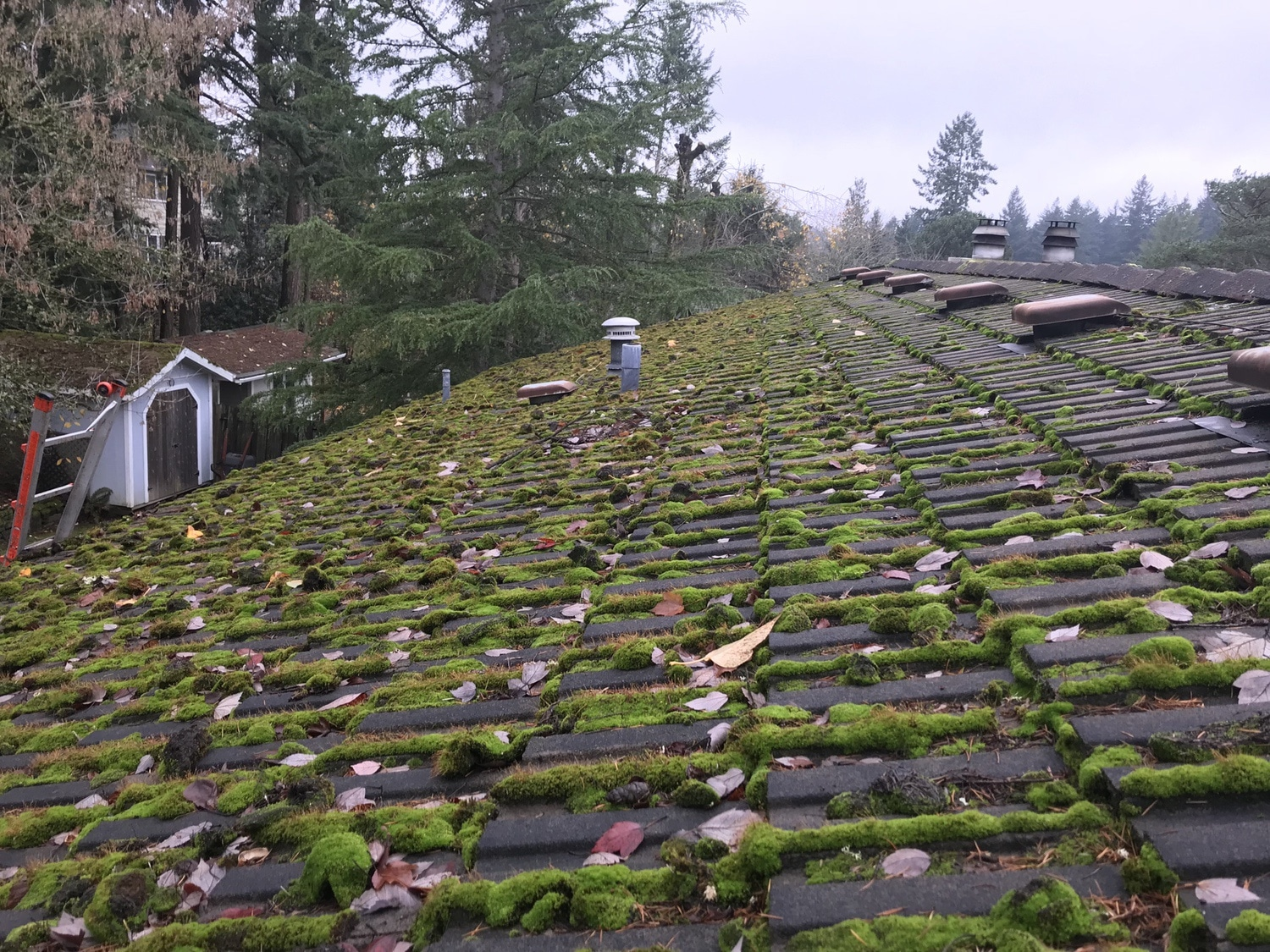 Concrete-Tile-Roof-Repair-Before