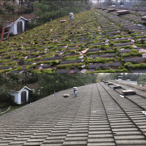 mossy roof before and after